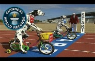Dogs on tricycles