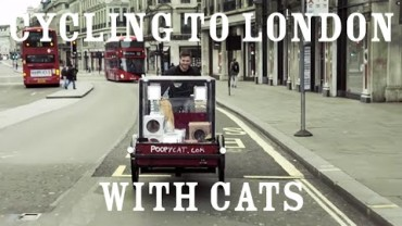 You have cat to be kitten me – 2 cats travel from Amsterdam to London launching Poopy Cat in the UK