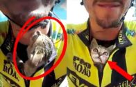 Kitten Won't Stop Kissing Cyclist Who Saved Her From Certain Death